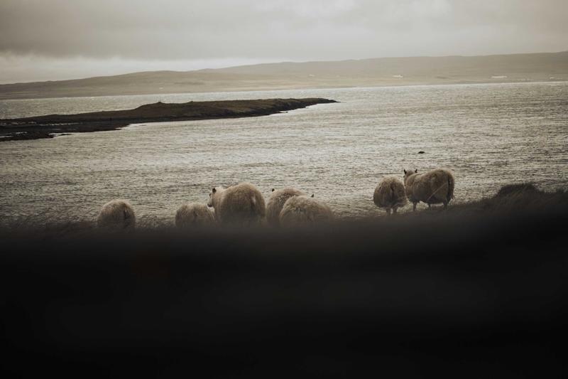 Anne_Moldenhauer_Reportage_Icelandskin